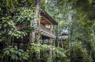 tdl-rainforest-villa-1