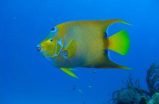 diving-1707738_1920