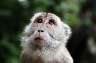 monkey-447106_1920