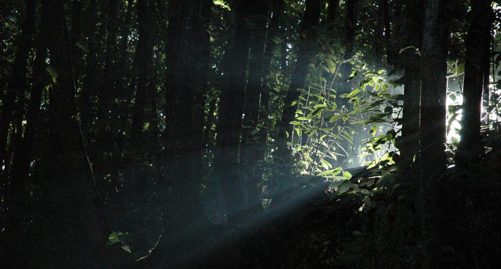 tree-nature-forest-branch-light-night-1006808-pxhere-com