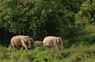 wild-elephant-2744258_1920